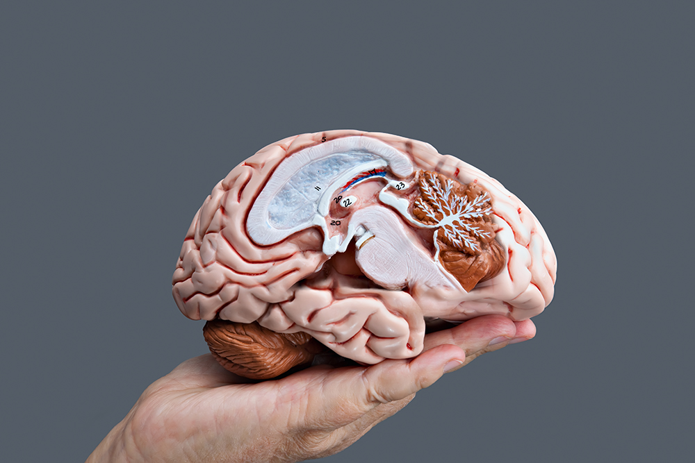 costal_neurosurgery_neurosurgery